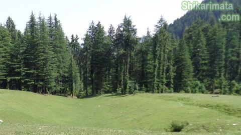 Bhulah green view shikari devi janjehli