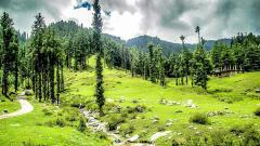 Janjehli Valley to Shakri mata and budha kadar trekking